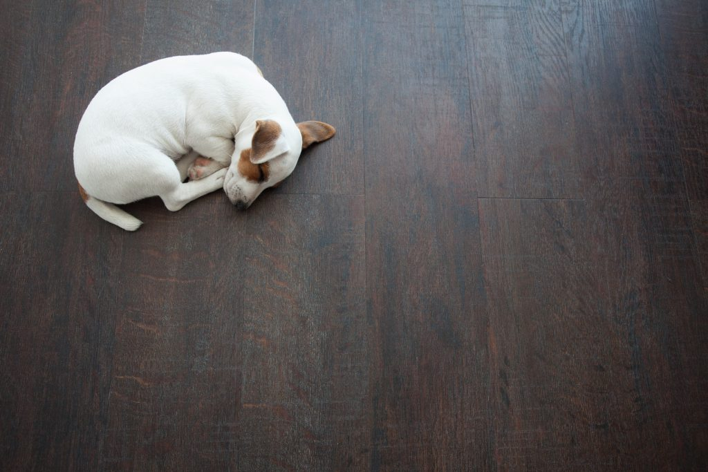 Puppy sleeping on warm floor. Dog