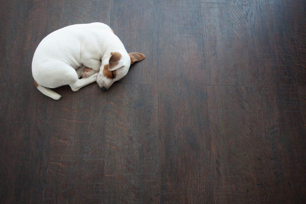 Puppy sleeping on warm floor. Dog